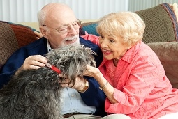 how does owning a pet benefit senior health